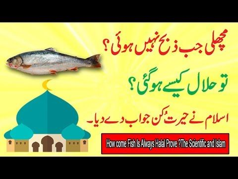 Information Halal Fish | Information About How Come Fish Is Always Halal? Prove Scientific And Islam