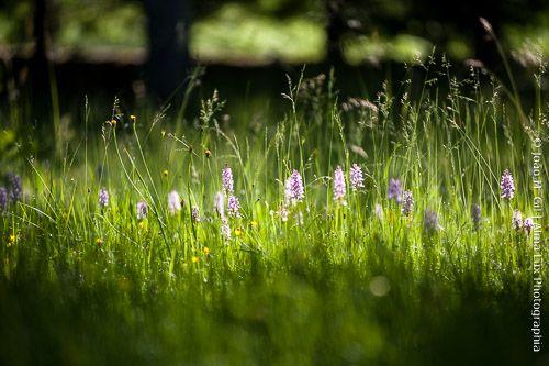 Bem alojados, e como sempre, para o próximo Workshop de Fotografia CAUSAS....no meio de orquídeas, carvalhos, bétulas e azereiros.