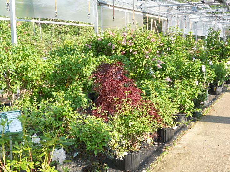 Come see the great selection of trees and shrubs. We feature tried and true favorites, as well as exciting new varieties. Weesies Garden Center.