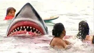 Camara Escondida del Tiburon   Videos Graciosos - YouTube