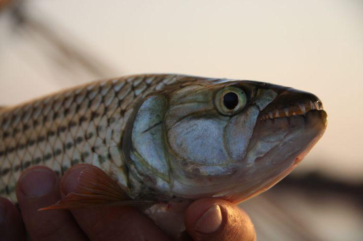 Fishing in Lake Kariba