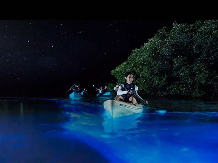 What's so amazing about Florida Bioluminescence Night Kayaking?  This is 1 of only 6 places in the world you can do this. Dinoflagellates and comb jellies GLOW in the dark river water!  People …
