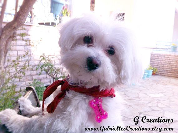 The Cutest Dog Tag  Hot Pink Bone Resin by GabriellesCreations #handmade #personalized #dogtag