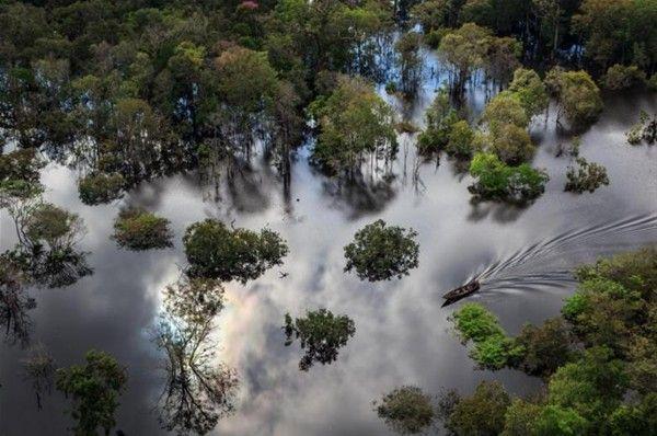 Amazon Nehri, Brezilya yakınında Anavilhanas Milli Parkı