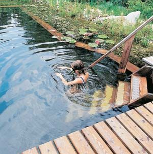 "A ""natural pool"" - a beautiful, ecologically diverse system that is relatively inexpensive to construct."
