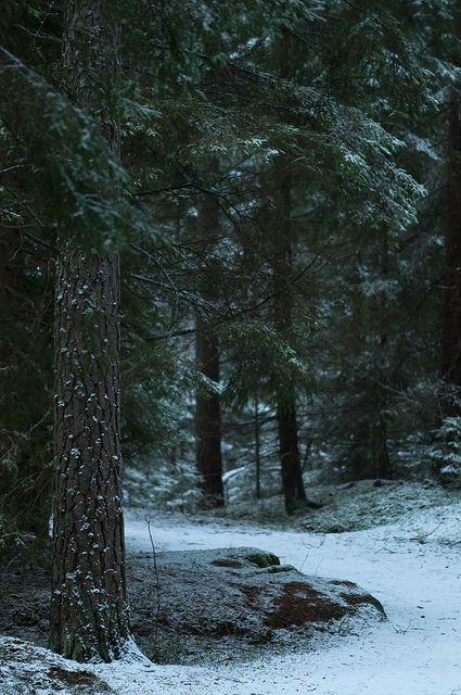 Stadsskogen by HOKarlsson on Flickr.