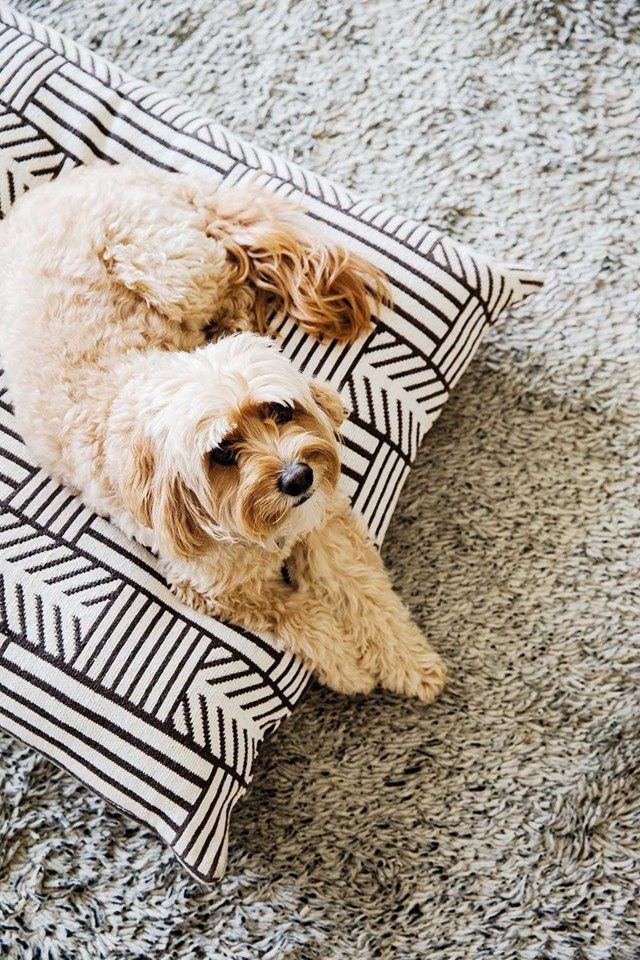 Creature comforts: posh picks and pointers for your pet | Home Beautiful Magazine Australia