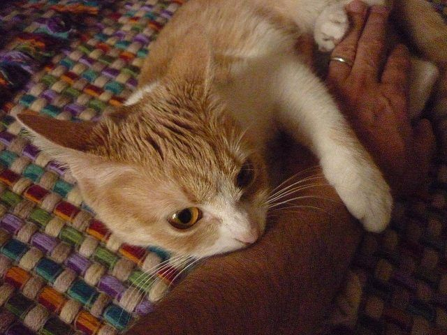4 Easy Ways To Stop Your Cat From Biting And Scratching In 2020 Cat Behavior Cat Biting Cat Training
