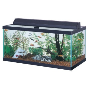 40 Gallon Aquarium Hood Combo @ PetSmart