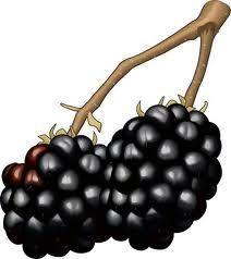 How to Trellis and Prune Thornless Blackberries for Easy Harvesting?