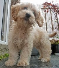 This is on my wish list - soon as I get a garden. Cute Cockapoo dog. :)x