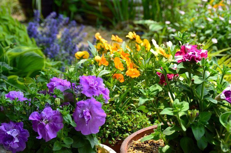 plants hot climate