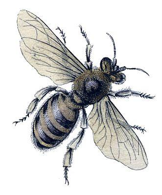 Instant Art Printable – Natural History – Honey Bees