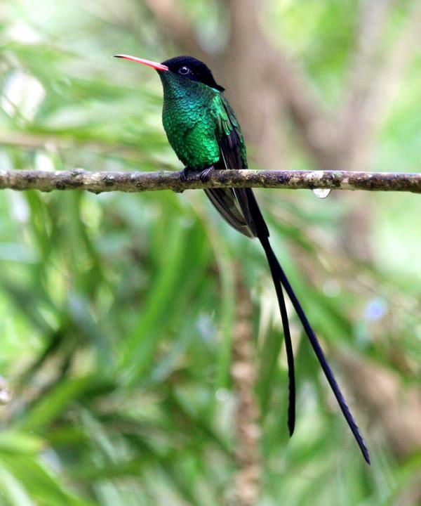17 best images about birds on pinterest trips jamaica and couple. Black Bedroom Furniture Sets. Home Design Ideas
