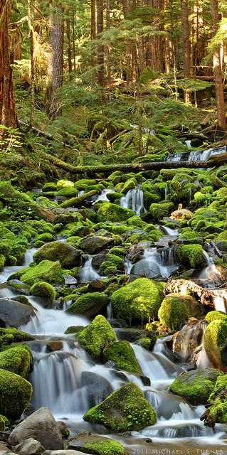 Mossy Creek along Sol Duc Falls Trail | Olympic National Park, Washington  //by Michael S. Turner