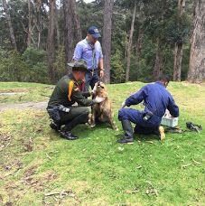 Carabineros de Colombia realizando campaña contra maltrato animal, esta vez con los perritos habitantes de calle. POLICIA DE COLOMBIA - Google+