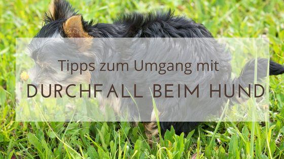 Duchfall kann beim Hund durchaus einmal vorkommen. Was ist Durchfall, was muss man beachten und wie kann der Magen-Darm-Trakt des Hundes unterstützt werden?