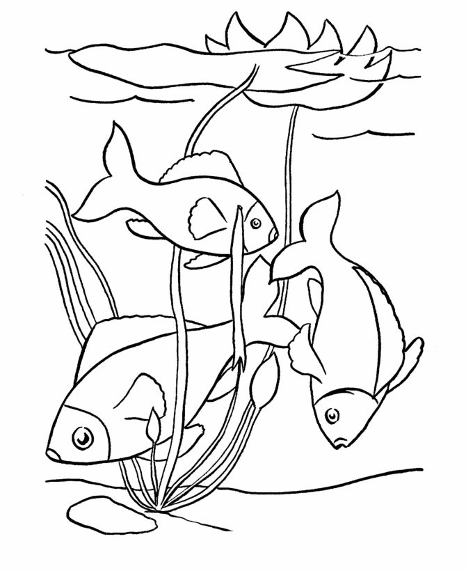 1797 best images about Colouring Pages on Pinterest  Free