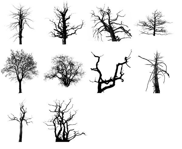 17 best images about halloween  trees  vines  u0026 plants on
