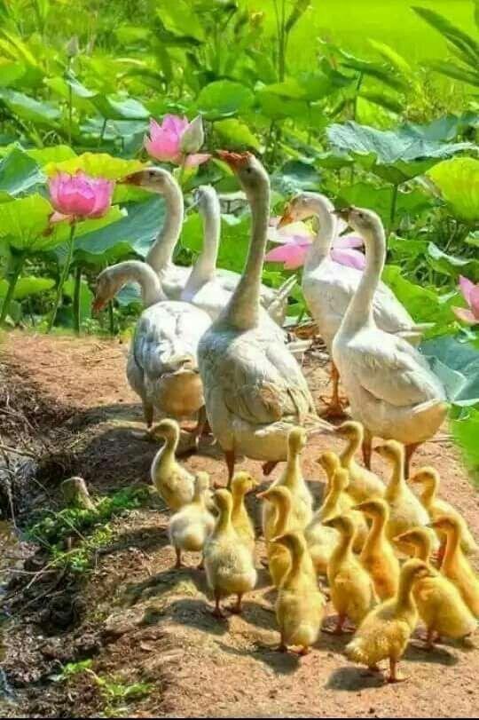 Adorable familia