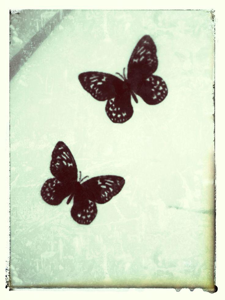 Butterflies in logo