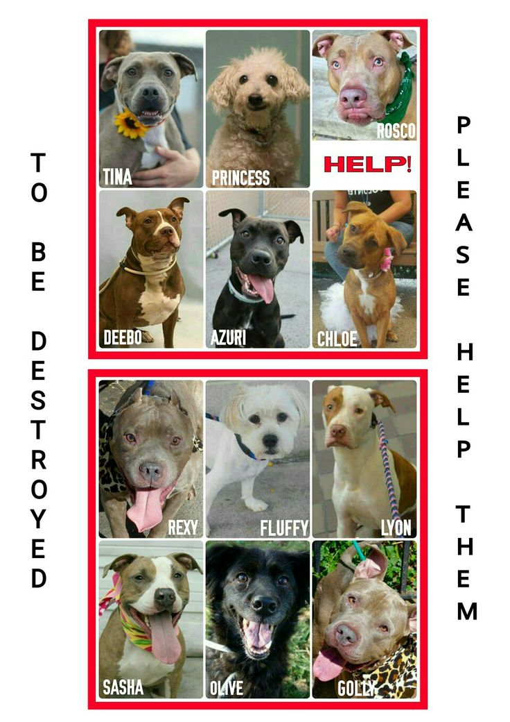 THE KILL LIST FOR MONDAY 9-26-16PLEASE SHARE NOW & SAVE A LIFEALL AVAILABLE @NYCDOGS.URGENTPODR.ORG FOR NOW