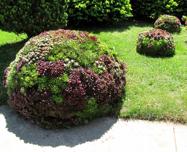 Large mounds of sempervivums and succulents at the Cleveland Botatnical Gardens. These are amazing. Like something out of a fantasy.