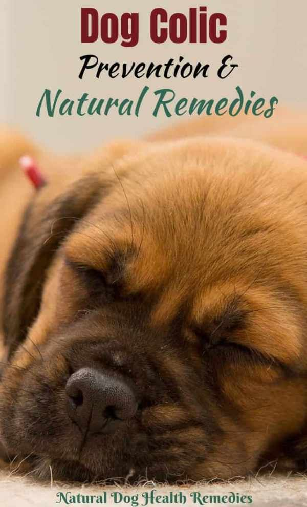 Dog Colic Dog Upset Stomach Remedies Relieve Gas Pains Natural