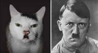 Ecco un video divertente di gatti identici al viso di personaggi famosi: ci sono ben 61 casi Vengono da tutto il Mondo. Ce n'è per tutti i gusti: dai cartoni animati ai fumetti, passando per personaggi storici, artisti e scrittori, fino ad attori e calciatori. Tra qualche anno i gatti sono d #gatti #animali #vip