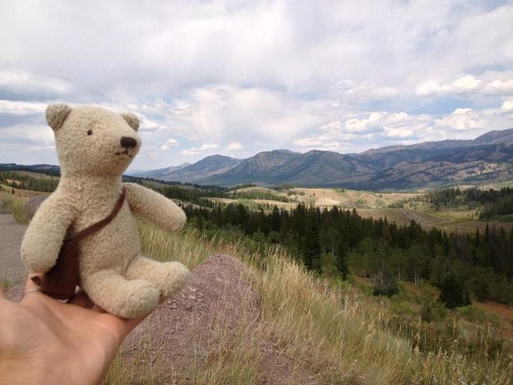 Lost on 17 Aug. 2013 @ Jackson Hole Rodeo, WY. Kai, a small light brown teddy…