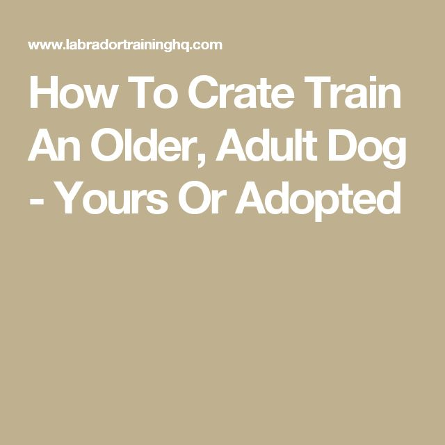 How To Crate Train An Older, Adult Dog - Yours Or Adopted