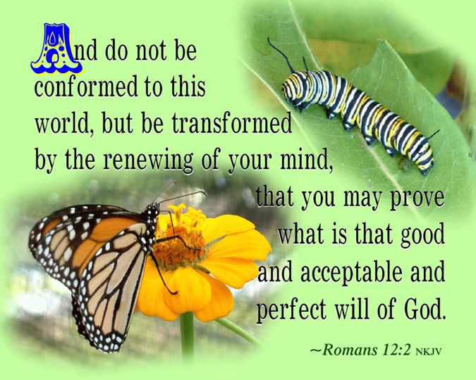 Bible Verse Romans 12 2 | 12. He is to have a good report (testimony) before all men (1 Timothy ...