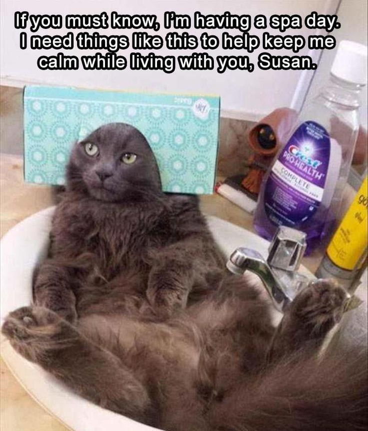 Geez, Susan. // cat spa day // funny cat memes