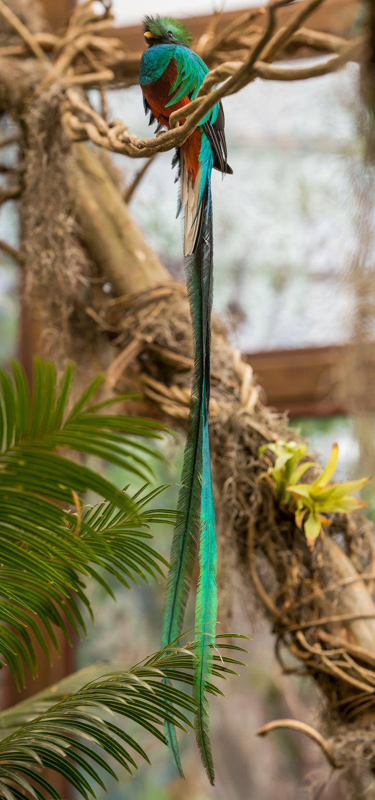 Quetzal Mayan Symbol 44 best Mayan Culture ...