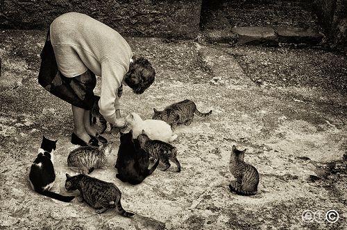 Gatti di Popetto (Toscana)