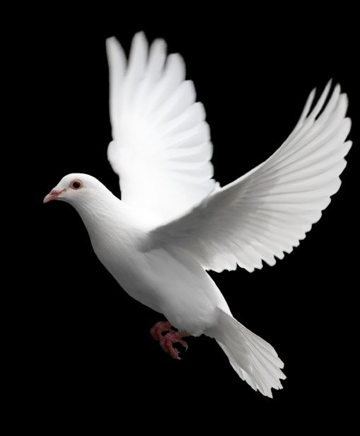 Dove Magic is one the most elegant forms of magic. The magicians that do it well, do it with class and grace.