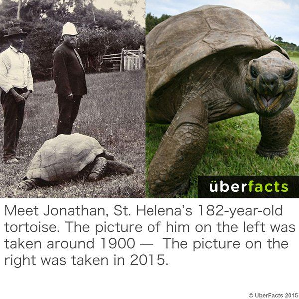 UberFacts UberFacts Twitter Facts Life Hacks - Jonathan tortoise mind blowing 182 years old