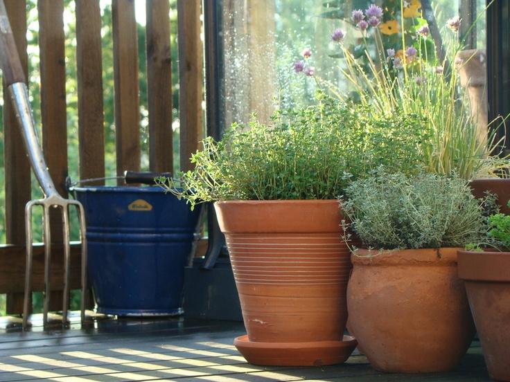 Kryddträdgård för terrass, balkong & köksfönster!