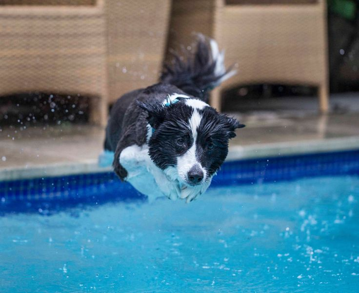 Despite having four of them, it's fair to say that most of our pets have two left feet when it comes to swimming. But gaining a diploma in dog paddle (or even cat crawl) isn't just great exercise, it could also be life-saving should they end up in the deep end.  Here are some tips to get them in the swim of it: https://www.facebook.com/dcbpets/photos/a.1512188539102428.1073741828.1512166082438007/1558671584454123/?type=3&theater - Dr. Chris Brown