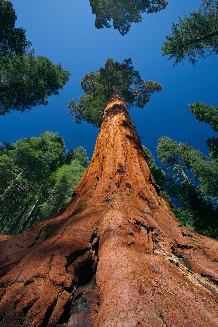 Yosemite National Park, Californien
