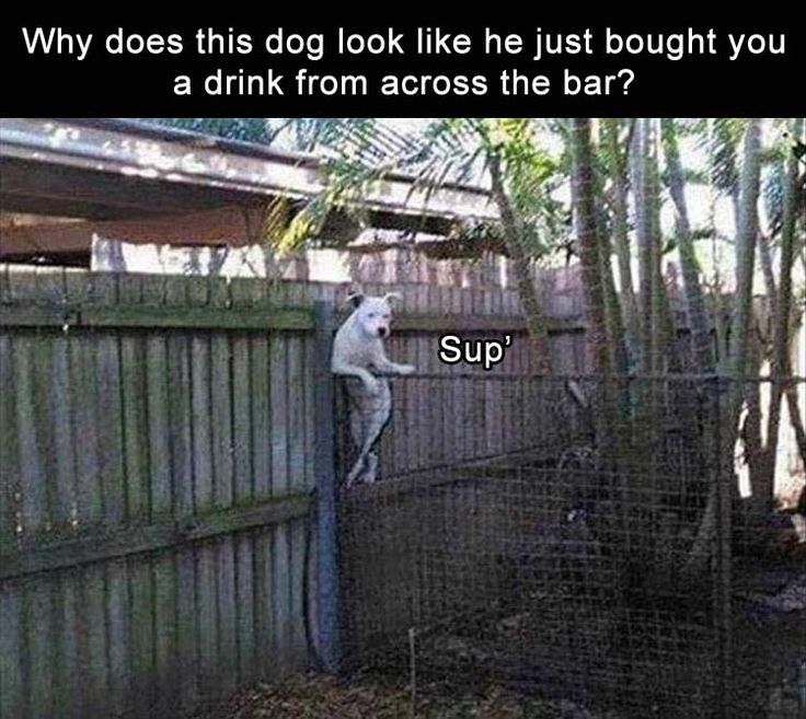 Afternoon Funny Picture Dump 35 Pics