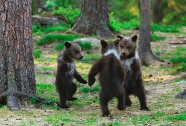 А Вы видели, как танцуют девушки и как танцуют парни в клубах? Смотрите 3 смешных ролика - http://irzhitalk.ru/tantsuyut-vse/