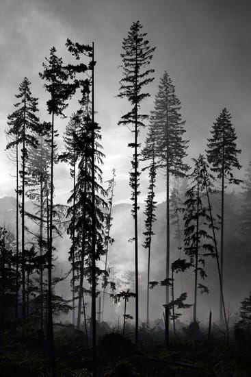 Smoke through the trees by Jason van der Valk on 5…