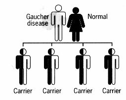 Gaucher Disease: A guide for patients; good illustration of heredity