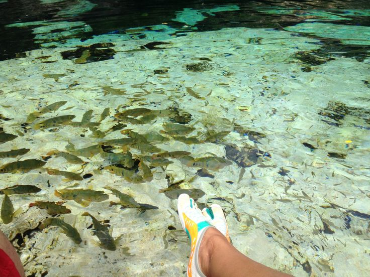 Cenote - Azul - Riviera Maya
