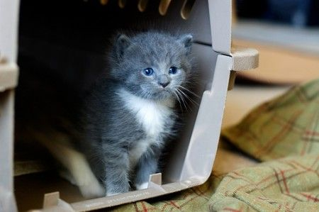 20 Common Mistakes of 1st Time Cat Owners