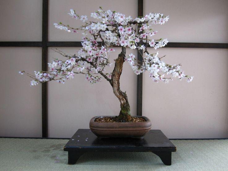 25+ Best Ideas About Bonsai Baum On Pinterest | Ornamentbaum ... Basiswissen Bonsai Baum Arten Pflege