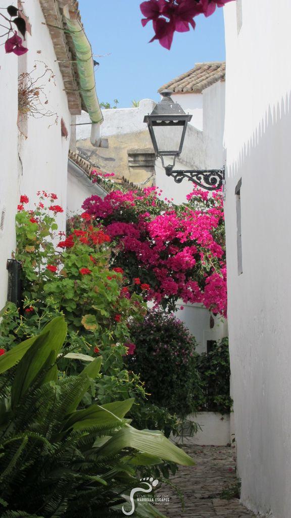 Pure Andalucian Colours!  http://marbellaescapes.com/  #bougainvillea #marbellaescapes #castellar #flowers #colours #summer #verano #andalucia #spain