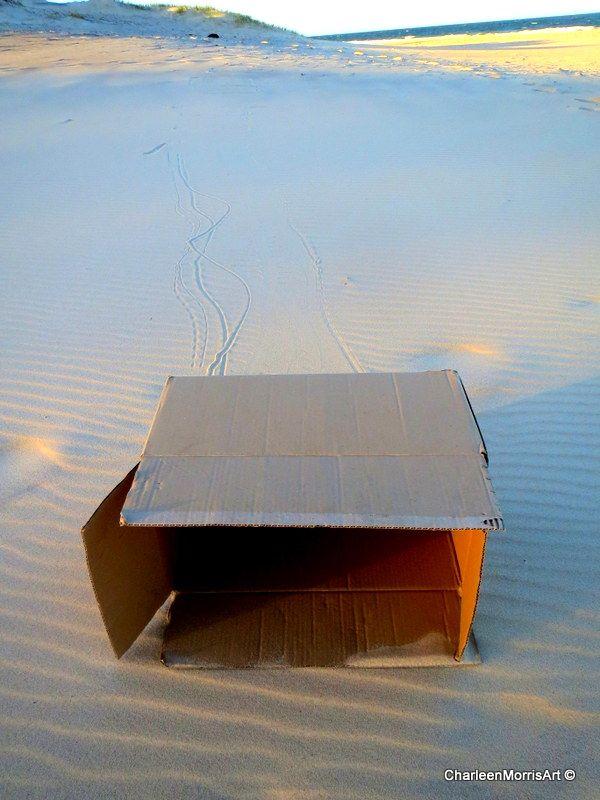 Abandoned  Cardboard Box Project
