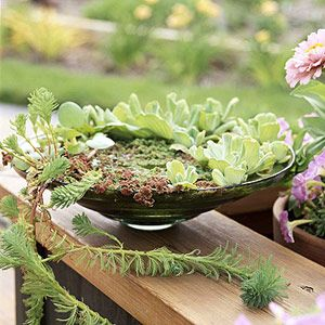 easy tabletop water gardens -- midwestliving.com